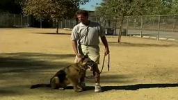 Basic Dog Training Tips : How to Train a Dog to Stop Barking