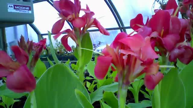 University greenhouses power flowers in Princeton's gardens