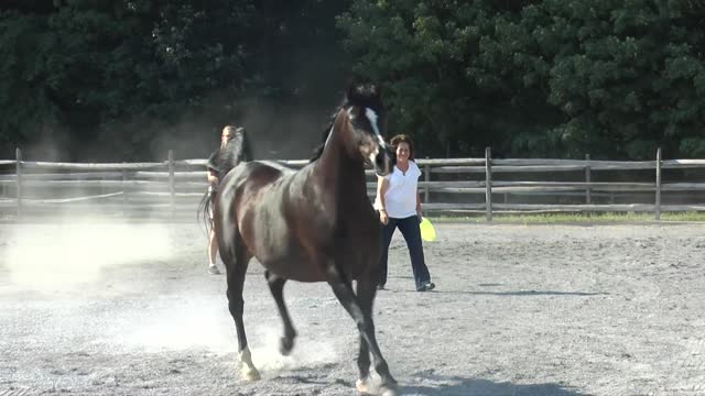 Champions prancing in the corral at Thornewood Farm
