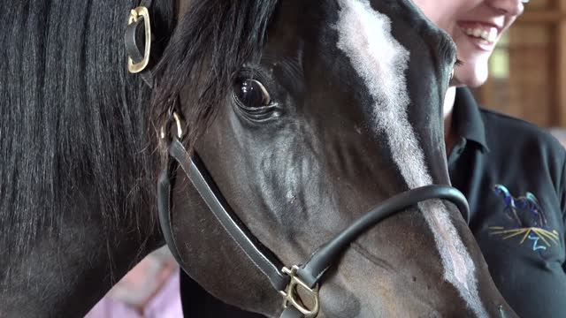 BBQ of Champions Thornewood Farms Egyptian/Arabians
