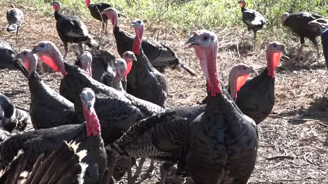 The Area's Best Turkeys - at Brick Farm Market Hopewell