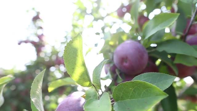 Princeton Farmers' Market: Terhune Orchards