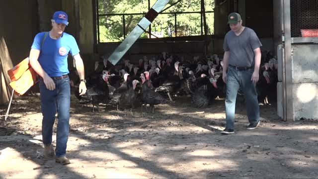 'Let's Talk Turkey' Brick Farm Market & Double Brook Farm