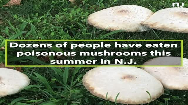 N.J.'s wild mushrooms are poisoning people at a staggering rate.