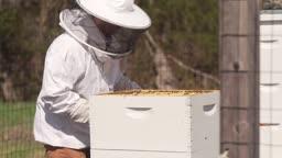 Beekeeping on Bloomberg's Princeton Campus Is Sweet.