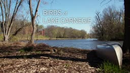 Birds of Lake Carnegie