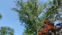 Loud Cicadas in Princeton, NJ