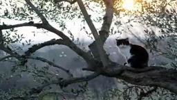Cat Rescue Pennington NJ