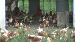 Cherry Grove Farm Organic Crop Field Trip to Cherry Grove F
