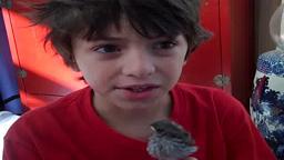 Orphan Sparrow