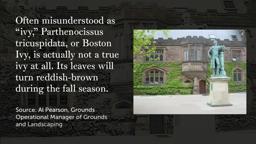 Ivy and Espalier Princeton University