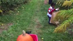 PumpkinTerhune Pumpkin and apple picking