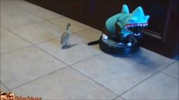 Cat in a Shark Suit Riding a Roomba and Chasing a Duck