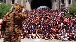 Reunions 2013 Princeton University